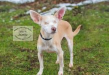 Adopt A Pet Dog of the week Juanita