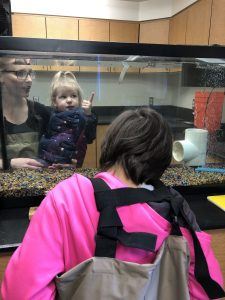Grays Harbor College Viewing baby salmon in fish lab aquarium