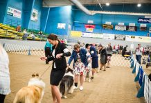 AKC Dog Show Grays Harbor Fairgrounds-18