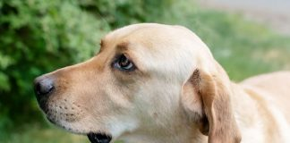 Adopt a Pet Dog of the Week Marley
