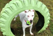 Adopt a Pet Dog of the Week Lana