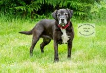 Adopt A Pet Dog of the Week LulU
