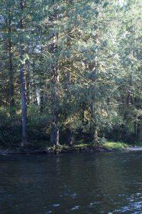 Satsop-River