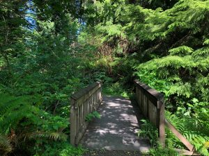 where to walk your dog in Aberdeen Lake swano bridge with green trees
