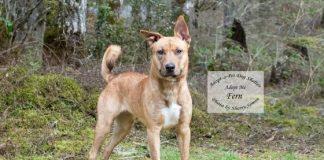 Adopt-A-Pet Dog of the Week Fern