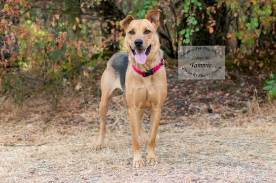 Adopt A Pet Dog of the Week Photo Tammie