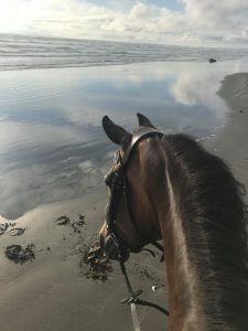 Where to Camp with Horses Grays Harbor Screamin Eagle Campground beach
