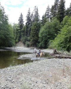 Where to Camp with Horses Grays Harbor West HumpTulips Trail