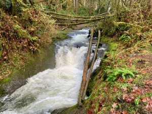 Where to walk your dog in McCleary Porter Creek Falls