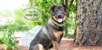 Adopt a pet dog of the week snoop dog