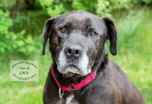 Adopt A Pet Dog of the Week CoCo