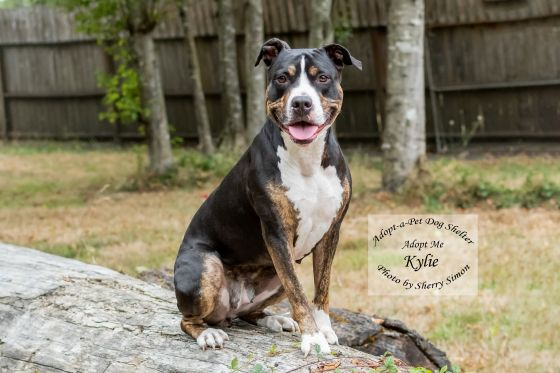 Adopt A Pet Dog of the Week Kylie