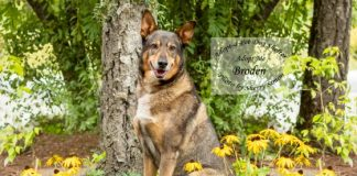 Adopt A Pet dog of the Week Broden