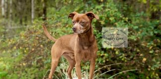 Adopt A Pet Dog of the Week Buddy Love