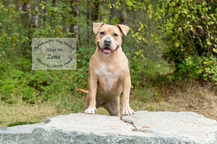 Adopt A Pet Dog of the Week Zena