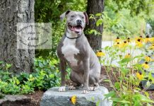 Adopt a Pet Dog of the Week Luna Bosco