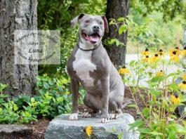 Adopt a Pet Dog of the Week Luna Bosco