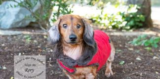 Adopt A Pet Dog of the Week Rory