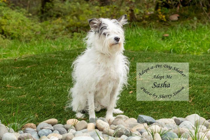 Adopt a Pet Dog of the Week Sasha