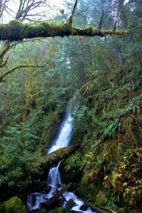 Merriman Falls Quinault Rain Forest