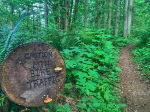 Where to Mountain Bike in Montesano