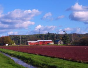 Grayland Cranberry Bogs