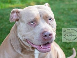 Adopt A Pet Dog of the Week Remy Renae