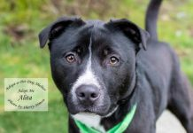 Adopt A Pet Dog of the Week Alita