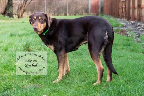 Adopt A Pet Dog of the Week Rachel