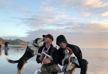 Dog Friendly Places to Stay Grays Harbor Seabrook Cottages rental