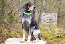 Adopt A Pet Dog of the Week Jasper