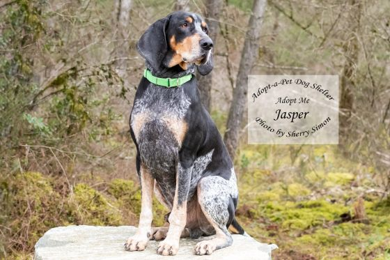 Adopt A Pet Dog of the Week Jasper