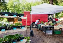 Evergreen-State-College-Organic-Farm-Stand-COVID-19-Farm-Stand