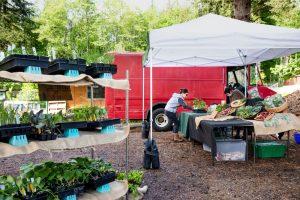 Evergreen-State-College-Organic-Farm-Stand-COVID-19-Farm-Stand