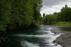 chehalis-lead-entity-wynoochee-river.