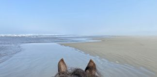 Horseback riding grays Harbor