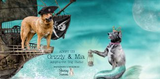 adopt a dog dog of thew eek mia and grizzly