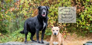 adopt a pet Dog of the Week Baily Girl and Magnum