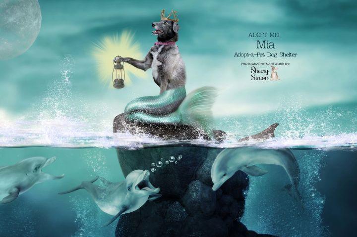 Adopt A Pet Dog of the week Mermaid Mia