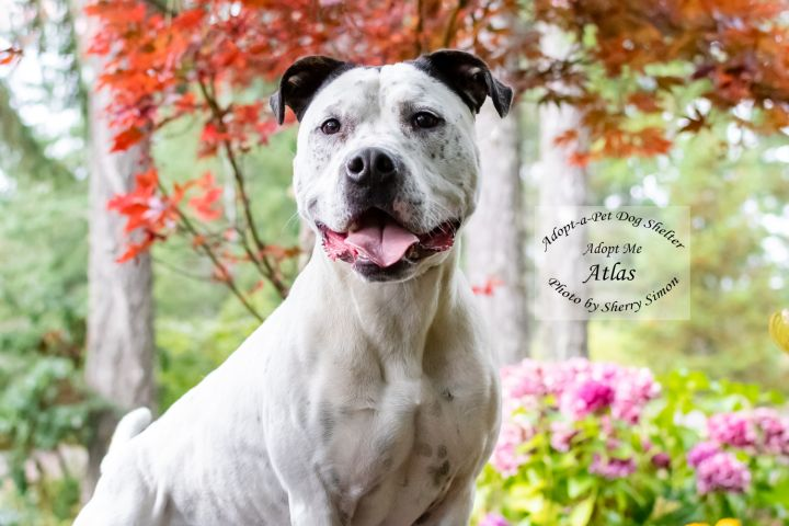 Adopt a Pet Dog of the Week Atlas
