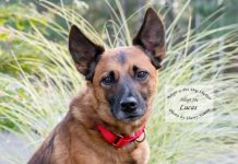 Adopt A Pet Dog of the Week Lucas