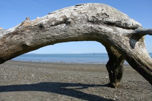 Beachcombing ocean shores-Damon-Point