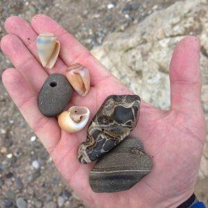 Beachcombing ocean shores Rocks-and-Shells