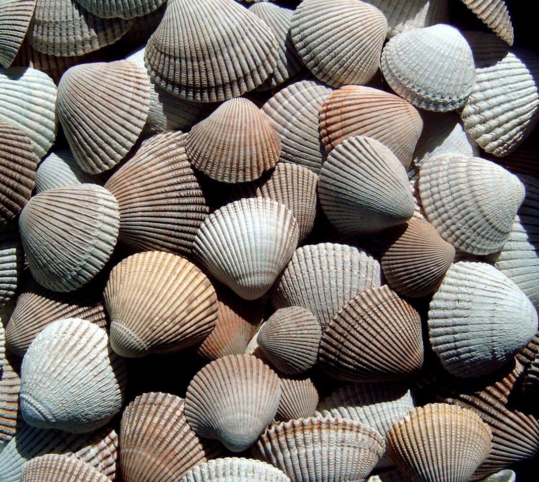 Beachcombing-ocean-shores-Shells