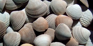 Beachcombing-ocean-shores-Shells