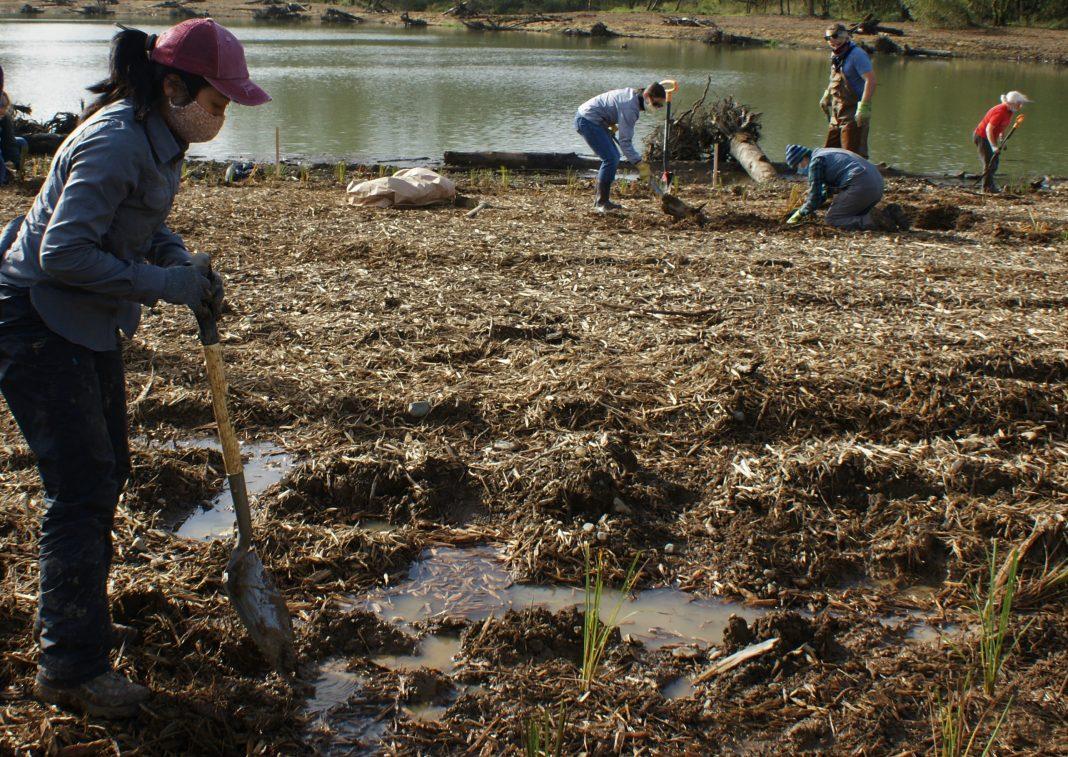 Elannah-Cross-October-27_2020-planting.