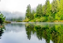 Grays Harbor Winter Hikes Lake-Sylvia-via-Tom-Collins