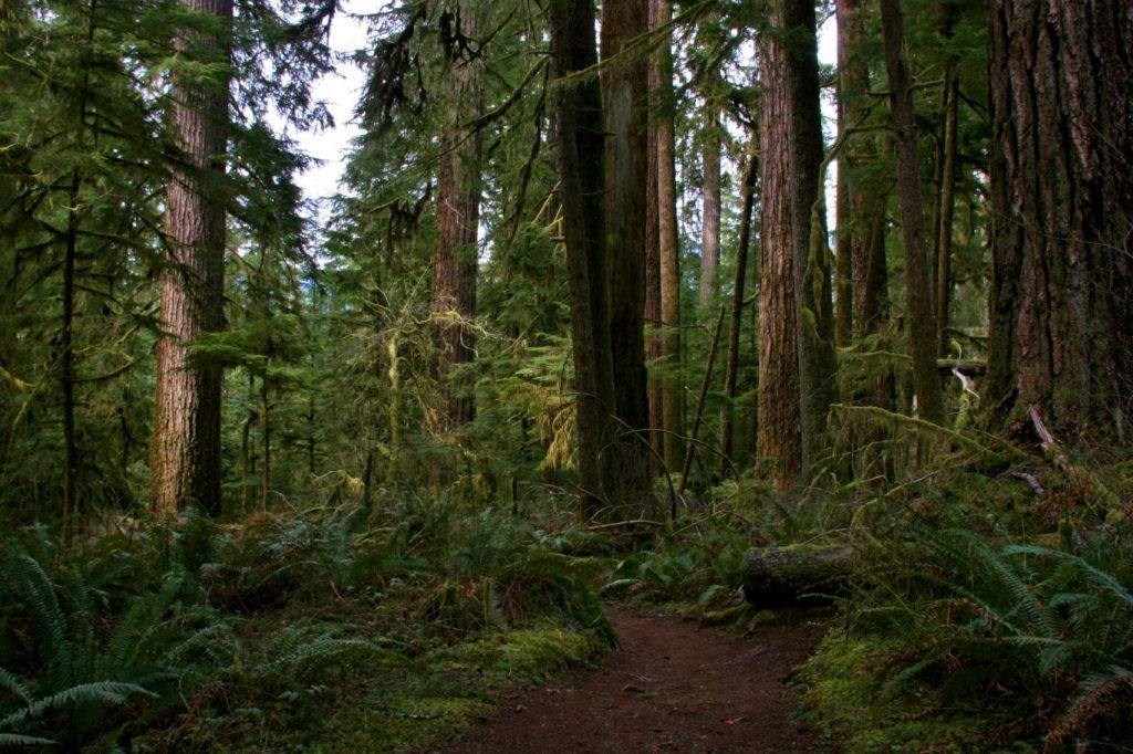 Grays Harbor Winter Hikes Quinault-Rainforest-Trail-via-Douglas-Scott