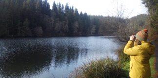 Winter-Bird watching-Grays-Harbor Lake-Sylvia