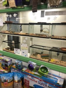 shop local grays harbor pet Marshalls-Garden-and-Pet-gerbils